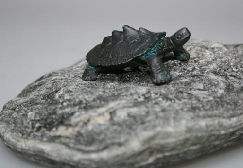 Baby-Wasserschildkröte Typ I